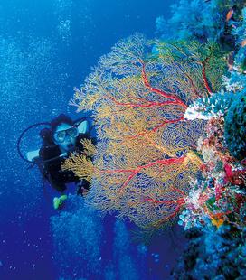 圖巴塔哈群礁 潛水客必訪的海底殿堂