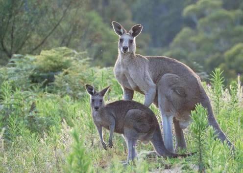 澳洲遊學-Kaplan-肯恩斯分校-戶外活動