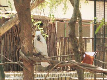 菲律賓遊學-蘇比克SLC-動物園